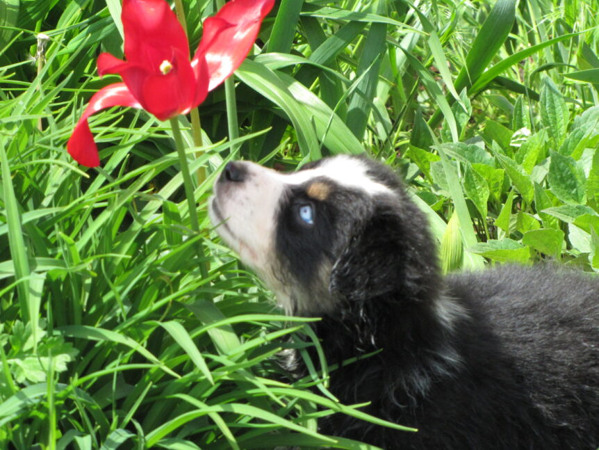 Jack looking at a flower