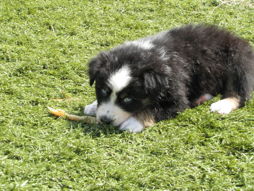 Clover with a bone