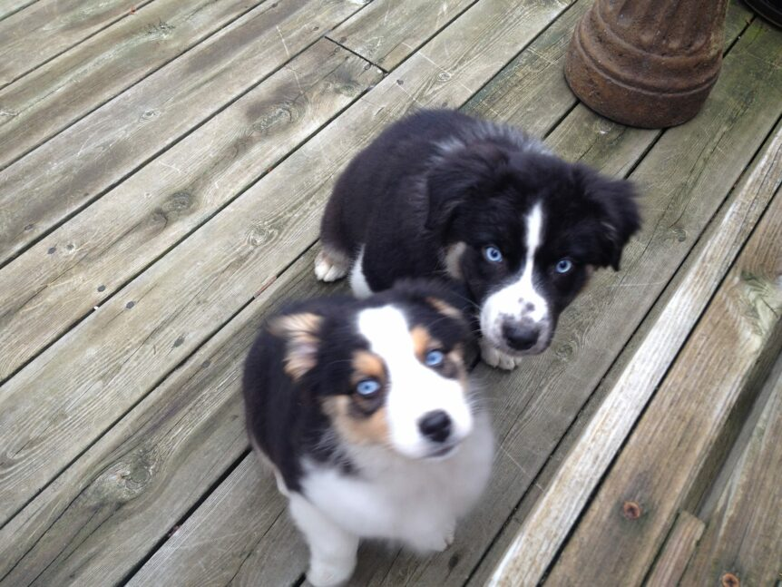 Rue & Rosie as puppies