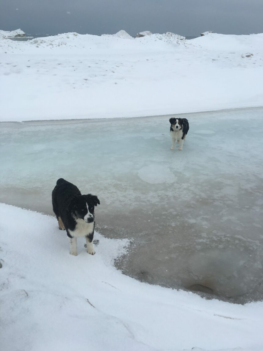 Rosie & Rue on frozen Lake Michigan