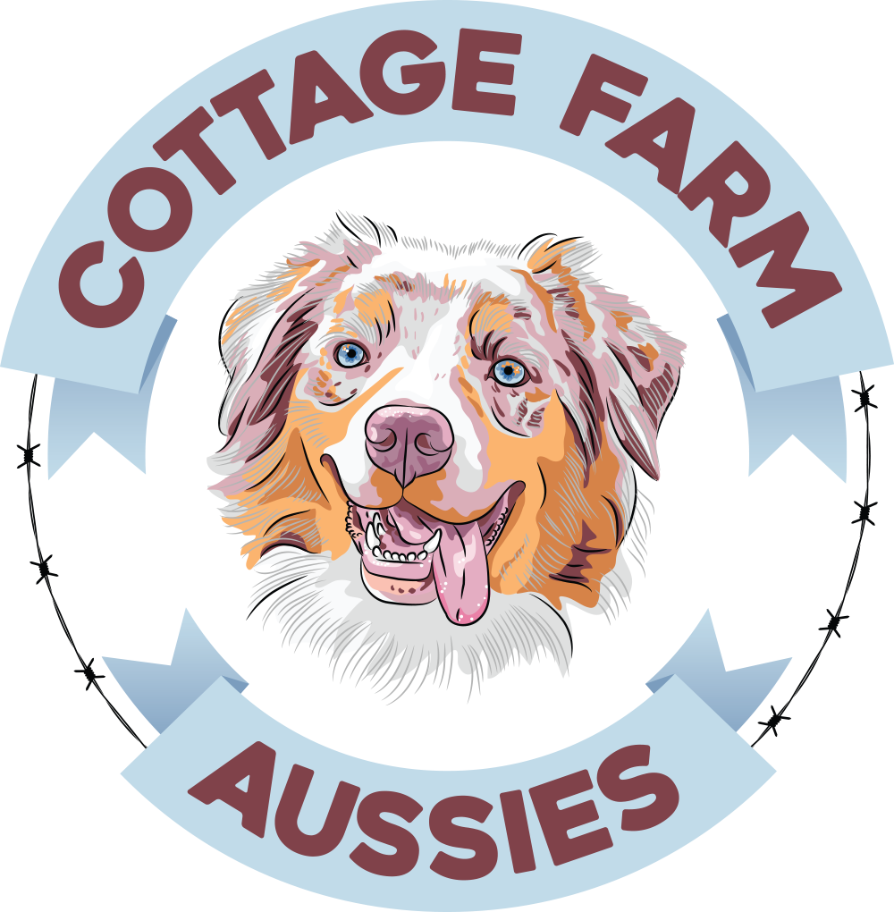 Cottage Farm Aussies